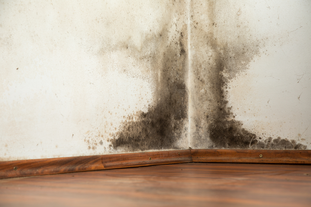 Mold & Mildew Remediation | Los Angeles County Tri Span Contractors
