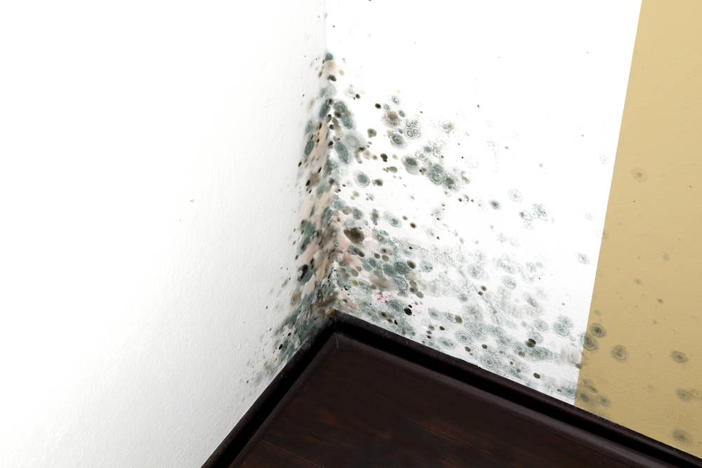 Eliminate Black Mold for a Healthier Environment   Tri Span Inc Waste Removal